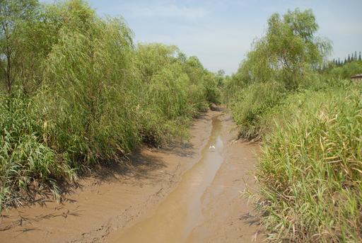 崇明島_西沙湿地
